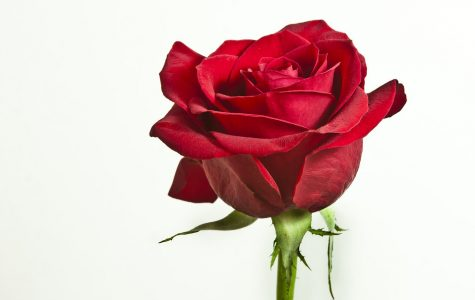 And the final rose goes to…