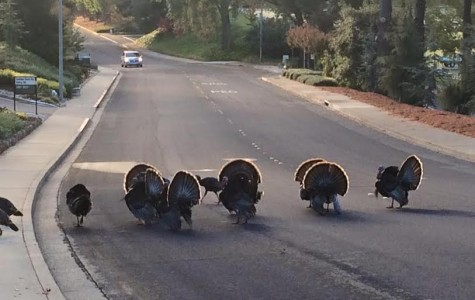 Fowl deed leaves turkeys troubled